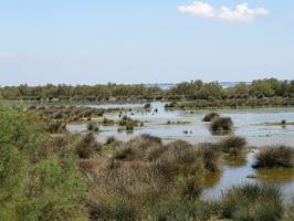 Sansouire et étang en Camargue