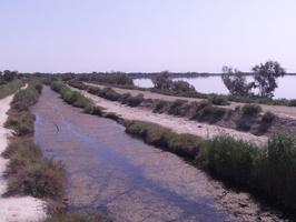 Sentier au boord de l'étang de Vaccarès