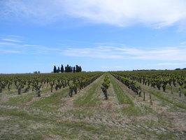 Vignoble du Domaine Listel