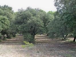 Truffière en Vaucluse